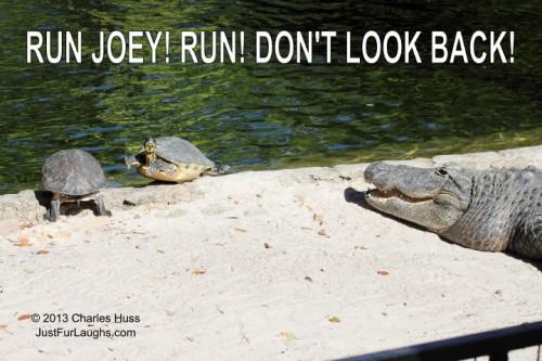 Run Joey Run