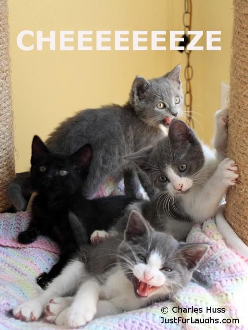 Cheeeeeeze
