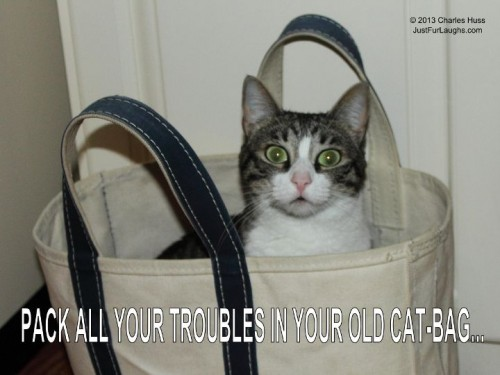Pack all your troubles in your old cat-bag...
