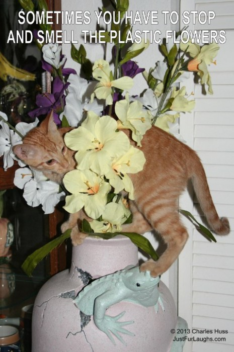 Stop and Smell the Plastic Flowers