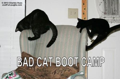 Bad Cat Boot Camp