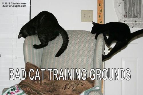 Bad Cat Training Grounds