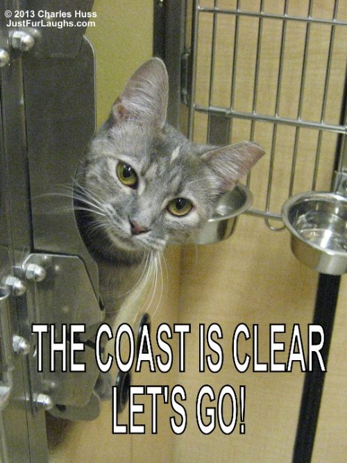 The coast is clear