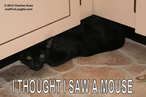 I Thought I Saw A Mouse