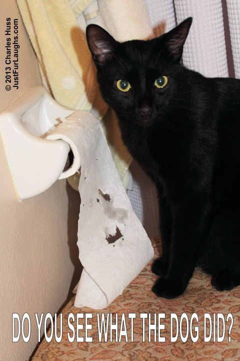 Do you see what the dog did? Cat tears up toilet paper.