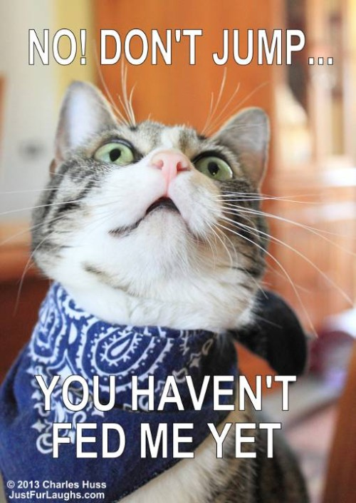 Cute, funny captioned cat photo.