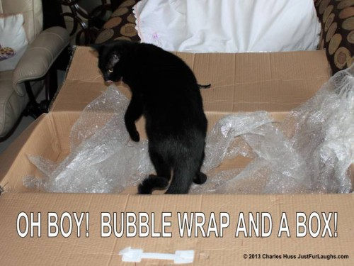 Our cat Puck inside box with bubble wrap.