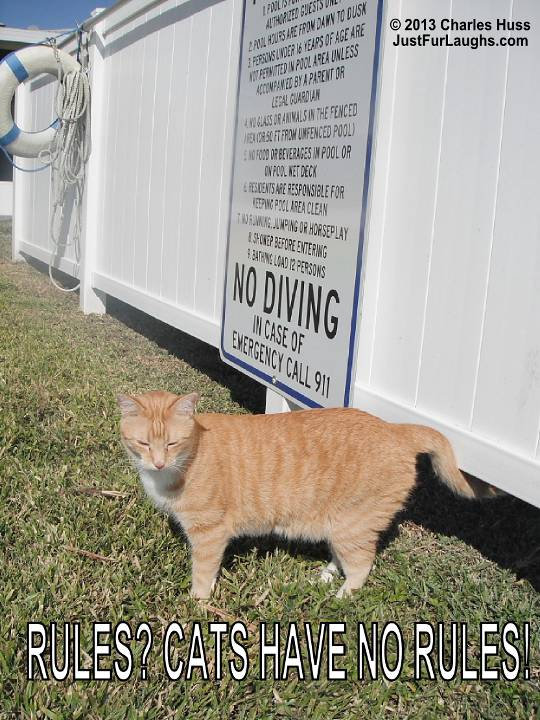 Cats have no rules