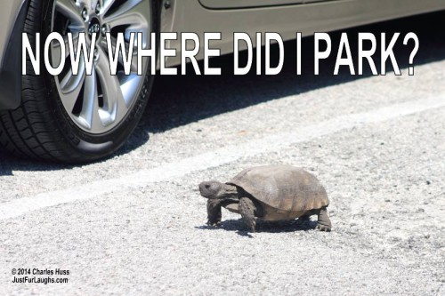 Tortoise in parking lot