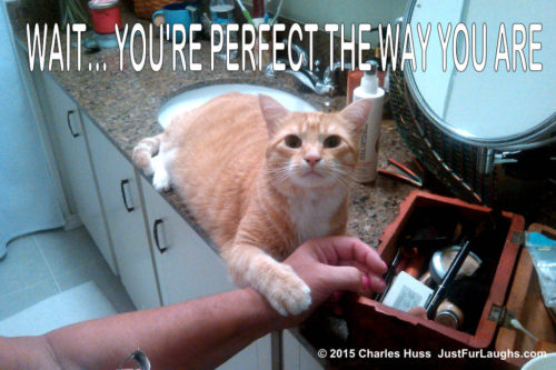 "Cat saying ""you're perfect just the way you are"""