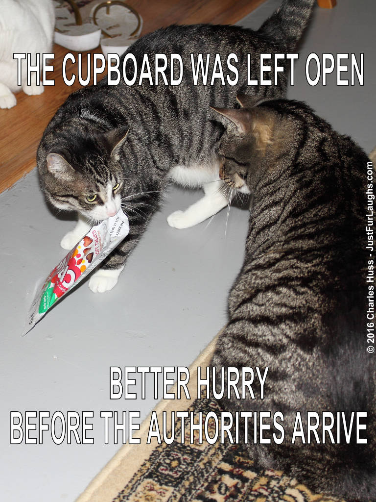 Cupbord left open
